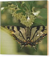 Butterfly From Another Side Wood Print