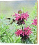 Butterfly Garden 5 Wood Print