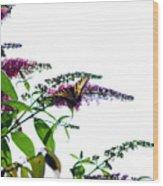 Butterfly Garden II Wood Print