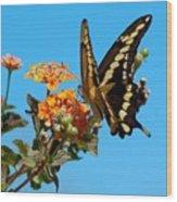 Butterfly IIi Wood Print
