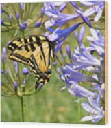 Butterfly In Blue Wood Print