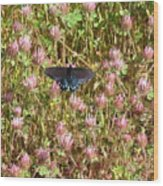 Butterfly In Clover Wood Print