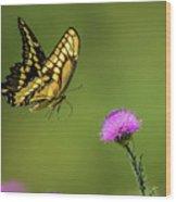 Butterfly In Flight Wood Print