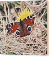 Butterfly In Ireland Wood Print