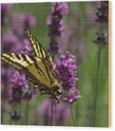 Butterfly In Lavender Wood Print