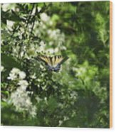 Butterfly In Muted Green Background Wood Print