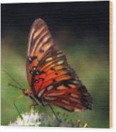 Butterfly In Orton Wood Print