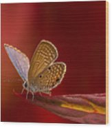 Butterfly In Red Wood Print