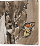 Butterfly In Sepia Wood Print