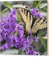 Butterfly In Summer Wood Print