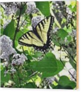 Butterfly In The Lilac No. 1 Wood Print