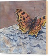 Butterfly-in-the-old-growth-forest Wood Print