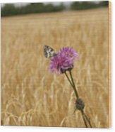 Butterfly In Wheat Field Wood Print