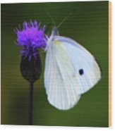 Butterfly In White Wood Print