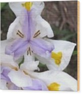 Butterfly Iris Wood Print