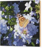 Butterfly Iv Wood Print