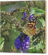 Butterfly Joy Wood Print