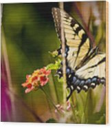 Butterfly Jungle Wood Print