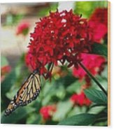 Butterfly Kiss Wood Print