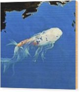 Butterfly Koi In Blue Sky Reflection Wood Print