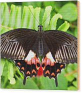 Butterfly Maze Wood Print