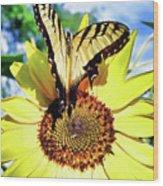 Butterfly Meets Sunflower Wood Print