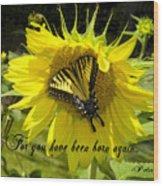 Butterfly Monarch Ba Wood Print