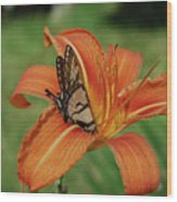 Butterfly On A Blooming Orange Daylily Flower Blossom Wood Print