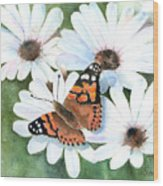 Butterfly On A Daisy Wood Print
