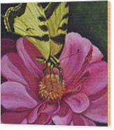 Butterfly On A Pink Daisy Wood Print