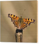Butterfly On A Stick Wood Print