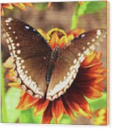 Butterfly On A Sunset Wood Print