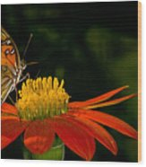 Butterfly On Blossom Wood Print