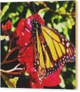 Butterfly On Bougainvillea Wood Print