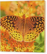 Butterfly On Butterfly Weed Wood Print