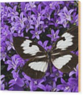 Butterfly On Campanula Get Mee Wood Print