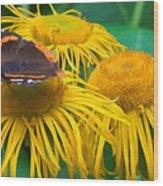 Butterfly On Chrysanthemum Flowers Wood Print