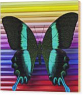 Butterfly On Colored Pencils Wood Print