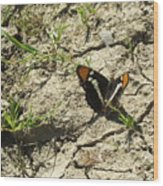 Butterfly On Cracked Ground Wood Print