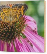 Butterfly On Echinacea  Wood Print
