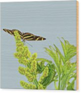 Butterfly On Flower Cluster Wood Print