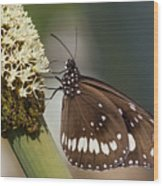 Butterfly On Grass Tree Flowers Wood Print
