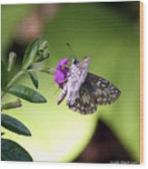 Butterfly On Heather Wood Print