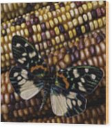 Butterfly On Indian Corn Wood Print