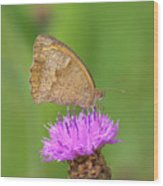 Butterfly On Knapweed Wood Print