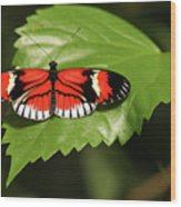 Butterfly On Large Leaf Wood Print