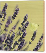 Butterfly On Lavender Flowers Wood Print