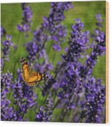 Butterfly On Lavender Wood Print
