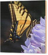 Butterfly On Lilly Wood Print