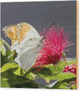 Butterfly On Magenta Flower Wood Print